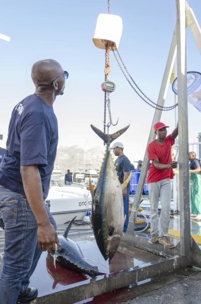 Tuna Fishing Cape Town Tuna Masters