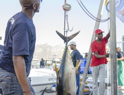 Tuna Masters Cape Town – Day 1