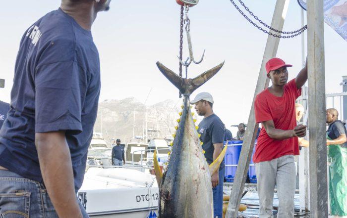 Tuna Fishing Cape Town Tuna Masters