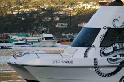 Tuna Masters Cape Town - deep sea fishing charters cape town fishing tuna fishing hout bay01