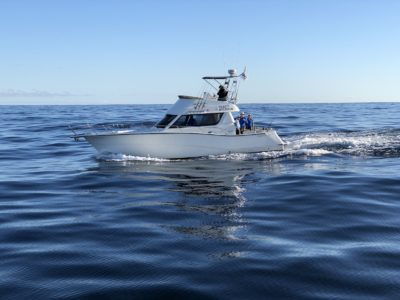 deep sea fishing charters cape town fishing tuna fishing hout bay 10115