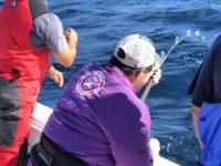 deep sea fishing charters cape town fishing tuna fishing hout bay 10121