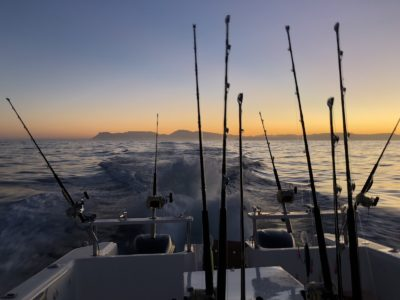 deep sea fishing charters cape town fishing tuna fishing hout bay 10122