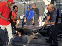 deep sea fishing charters cape town fishing tuna fishing hout bay 10124