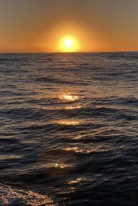 deep sea fishing charters cape town fishing tuna fishing hout bay 3