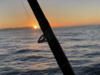 deep sea fishing charters cape town fishing tuna fishing hout bay 5