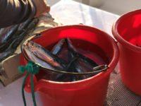 deep sea fishing charters cape town fishing tuna fishing hout bay 6